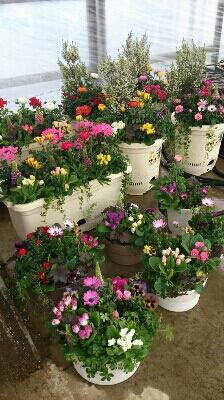 春ですね_e0086738_2342650.jpg