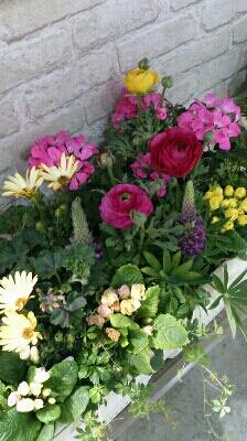 春ですね_e0086738_234463.jpg