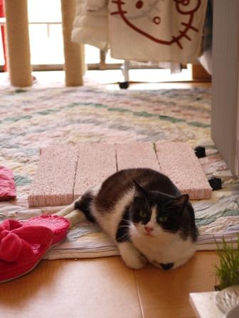 赤ちゃんを産んだ猫 らぃら編。_a0143140_22102347.jpg