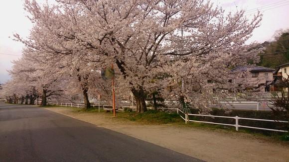春爛漫_c0206243_17384571.jpg