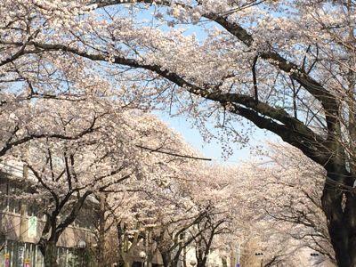 お花見日和_a0153945_12353891.jpg