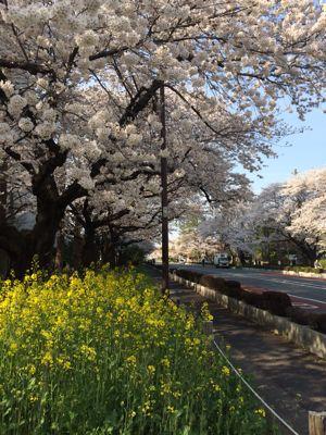 お花見日和_a0153945_1235401.jpg
