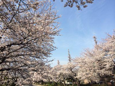 お花見日和_a0153945_12354057.jpg
