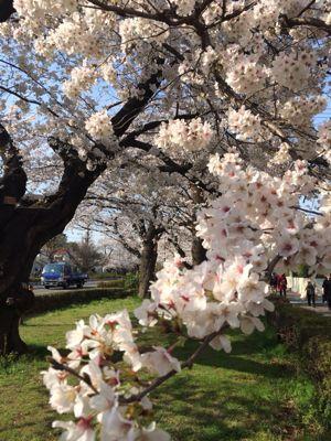 お花見日和_a0153945_12354133.jpg