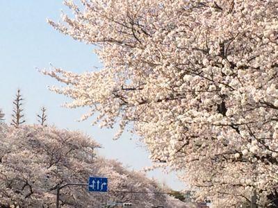 お花見日和_a0153945_12354195.jpg
