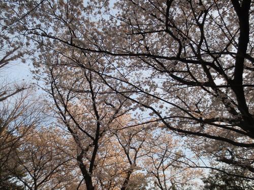 春のコンサート、終演いたしました~!_e0173350_1253125.jpg