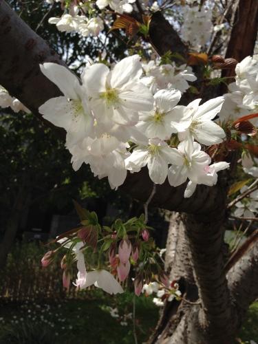 絶景の花見_c0185356_07265291.jpg