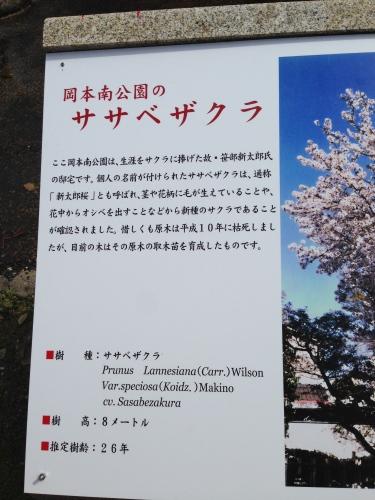 絶景の花見_c0185356_07332778.jpg