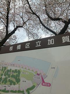 sakura その4  お花見ランチと花吹雪と♪_a0165160_07484919.jpg