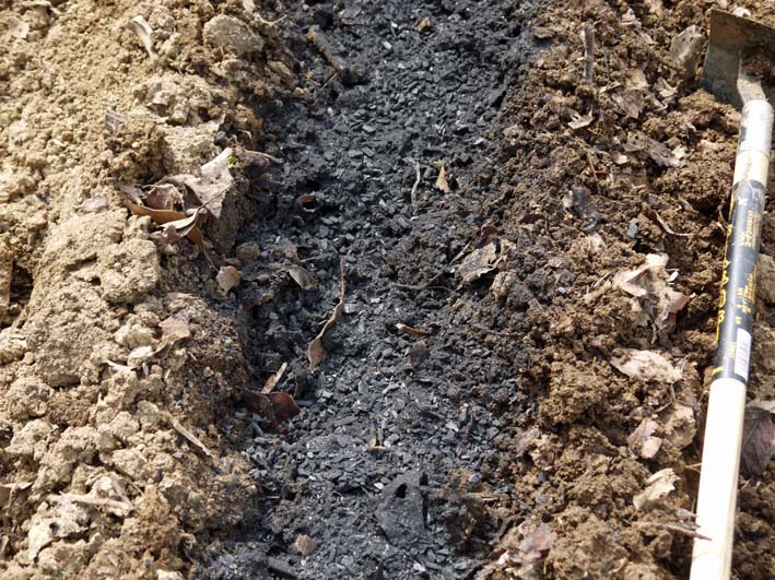 雪の影響か?里芋の生存1割&トウモロコシ種まき4・1~2_c0014967_10554725.jpg