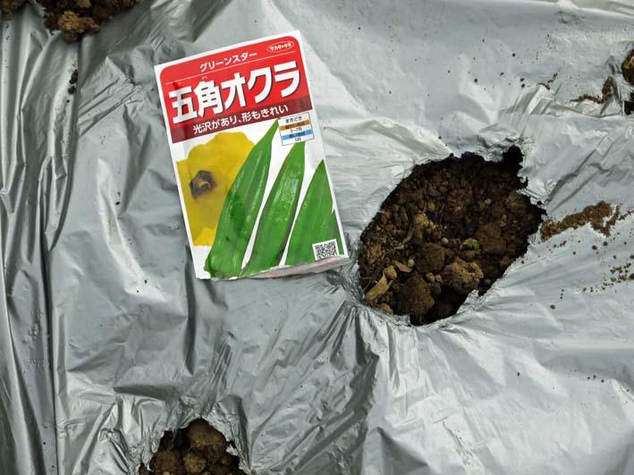 雪の影響か?里芋の生存1割&トウモロコシ種まき4・1~2_c0014967_1123067.jpg