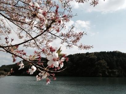 3・9・10周年記念の春***_e0290872_1358137.jpg