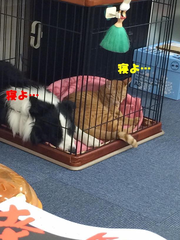 ないしょ話_c0226073_1471830.jpg