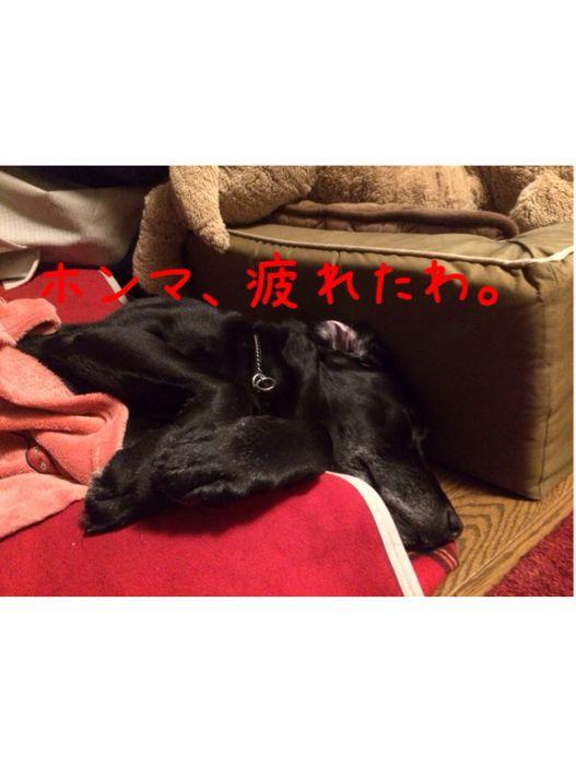 桜の季節_e0244283_1432079.jpg