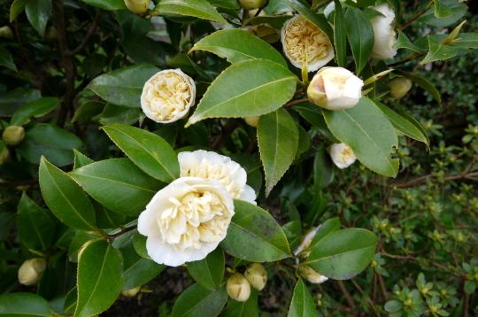 桜の下の英語の俳句_d0129786_15252373.jpg