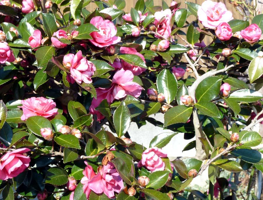 春が来た!_f0150893_2082426.jpg