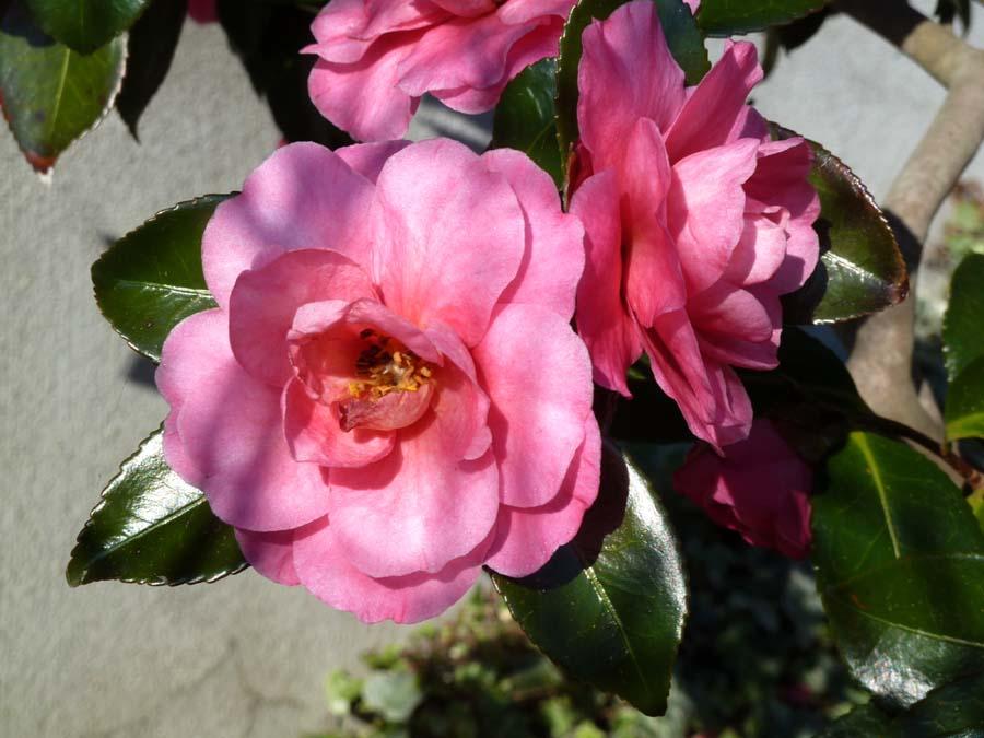 春が来た!_f0150893_2083958.jpg