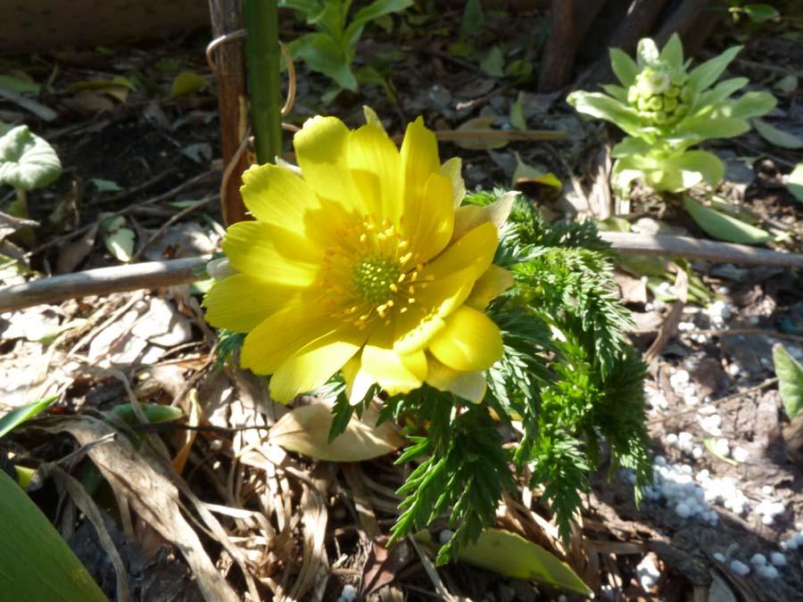 春が来た!_f0150893_209143.jpg