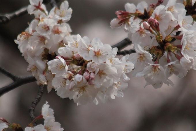 d0025894_0324748.jpg