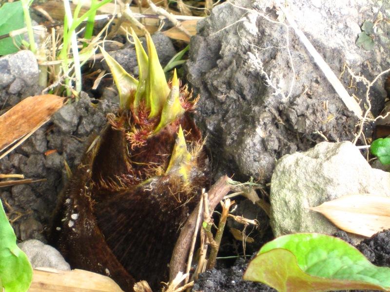 春。竹の子発見!_a0208899_11242763.jpg