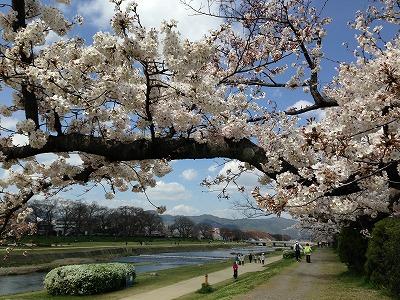 お花見散歩_a0273699_8512339.jpg
