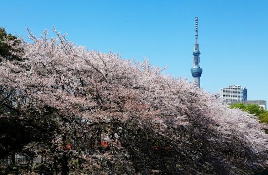 風に舞う桜_b0083801_16142755.jpg