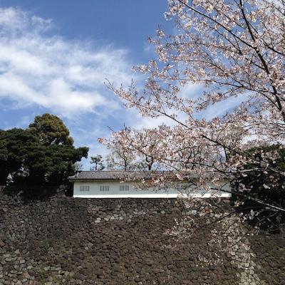 桜.さくら.サクラ in 皇居_d0154102_20363321.jpg