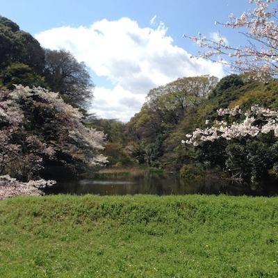 桜.さくら.サクラ in 皇居_d0154102_20374962.jpg