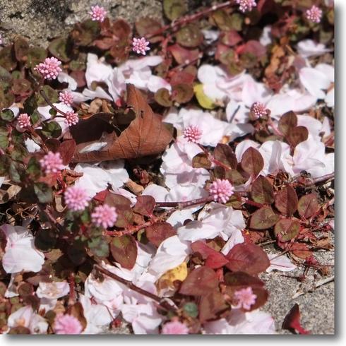 桜散り次々と...。_f0099102_126956.jpg