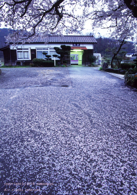 桜雨のあとで_d0309612_034319.jpg