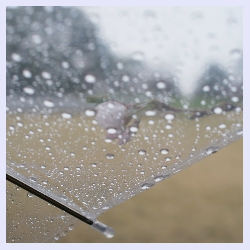 ■ 雨も似合う_b0148920_18325462.jpg