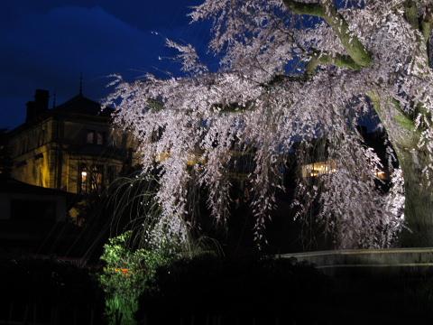 そうよ、京都に行こう!!!_d0046025_041747.jpg