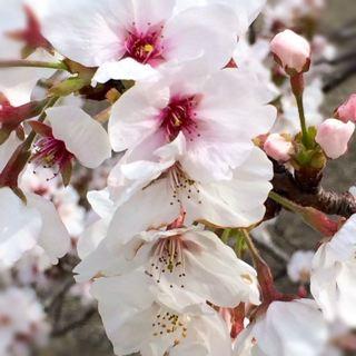 芽吹きと花の季節 ♫_f0309325_18172320.jpg