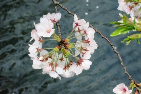 桃から緑へ_a0259130_22523760.jpg