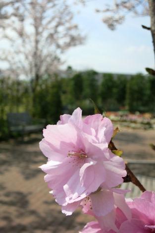 桃から緑へ_a0259130_22533399.jpg