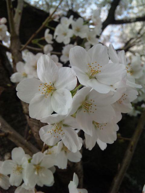blog;4月のスケジュール(4/21青山公演詳細追記しました。)_a0103940_14364016.jpg