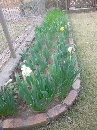 春の庭状況_a0139242_5372394.jpg