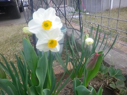 春の庭状況_a0139242_5381372.jpg