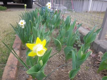 春の庭状況_a0139242_5384296.jpg