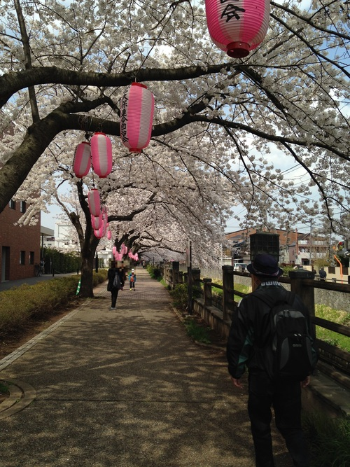 お花見散歩_a0267942_12165653.jpg