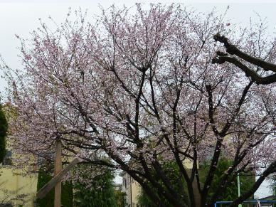 10月桜も満開_b0115553_13324663.png