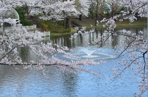 10月桜も満開_b0115553_13415651.png