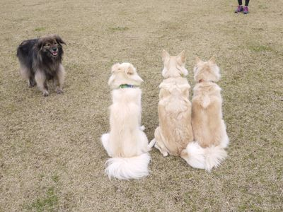 カナイくんを探せ!〜白犬クイズ〜_a0119263_17305428.jpg