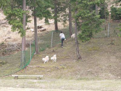 カナイくんを探せ!〜白犬クイズ〜_a0119263_17362830.jpg