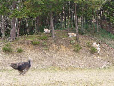 カナイくんを探せ!〜白犬クイズ〜_a0119263_17371435.jpg