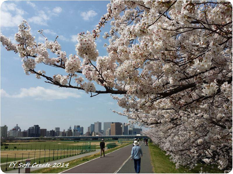 ◆ 桜咲く多摩川土手へ (2014年4月)_d0316868_9151292.jpg