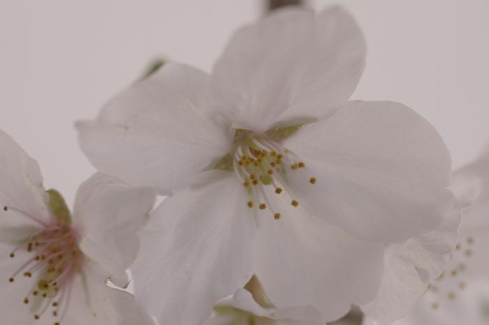 ベランダでお花見_e0292469_16504435.jpg