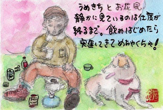 うめきちとお花見_e0232277_1050387.jpg