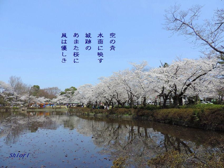 桜満開!_c0187781_21420347.jpg