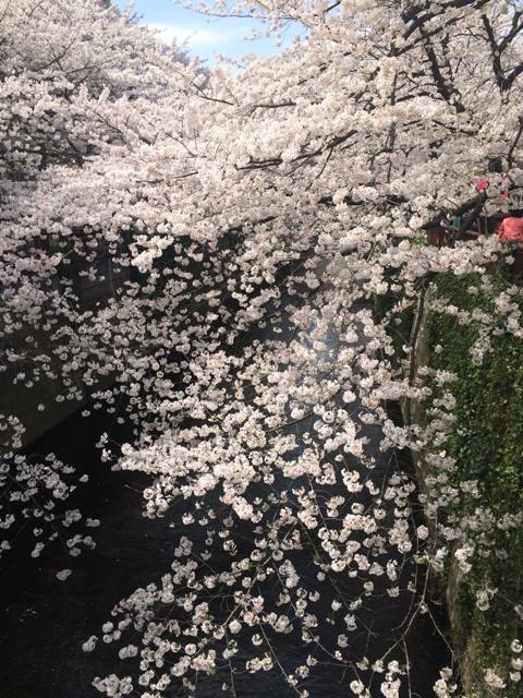 今年の桜が散っていきます・・・_f0083294_19201114.jpg